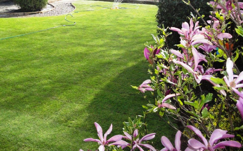 Freshly Laid Lawn Mdc Landscapes Ltd