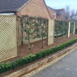 Pleached photinia x fraseri, buxus hedging & oak borders 2.