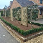 Pleached photinia x fraseri, buxus hedging & oak borders 3.