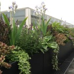 Commercial planting schemes.